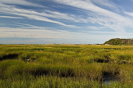 Provincelands Marshlands. Morning. Provincetown. Cape Cod. Massachusetts. USA. : Stock Photo