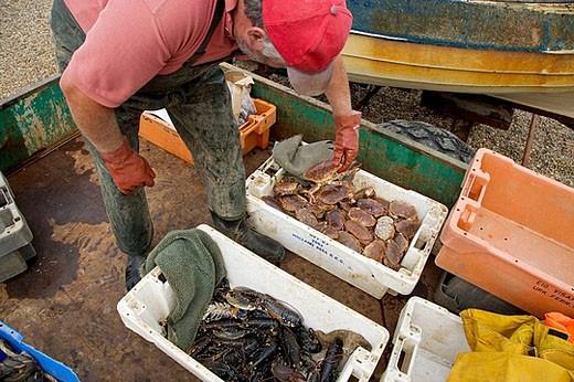 Stock Photo: 1566-389195 Fishing Boat landing catch at Weybourne Norfolk. UK