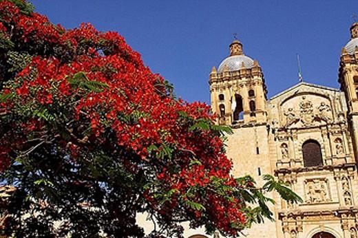 Church of Santo Domingo. Oaxaca, Mexico : Stock Photo