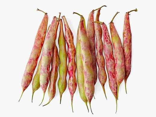 Fava Bean Also known as broad beans, Family: Leguminosae, Vicia faba. fava beans require a bit of teasing to get them ready to cook _ you need to remove them from their pods, blanch them briefly, and squeeze the bean out of its whitish peel. : Stock Photo
