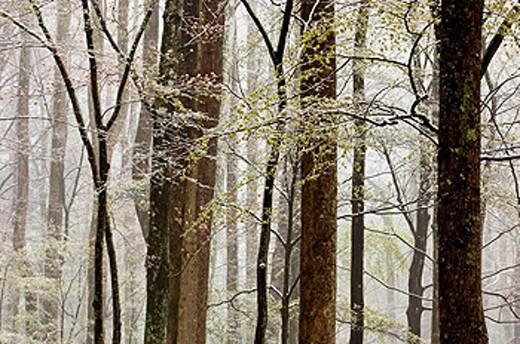 Wet snow in deciduous woodland : Stock Photo