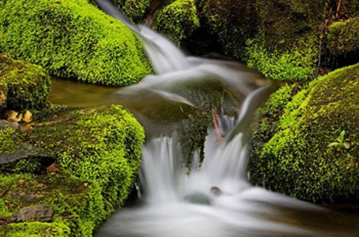 Stock Photo: 1566-396573 Mossy cascade