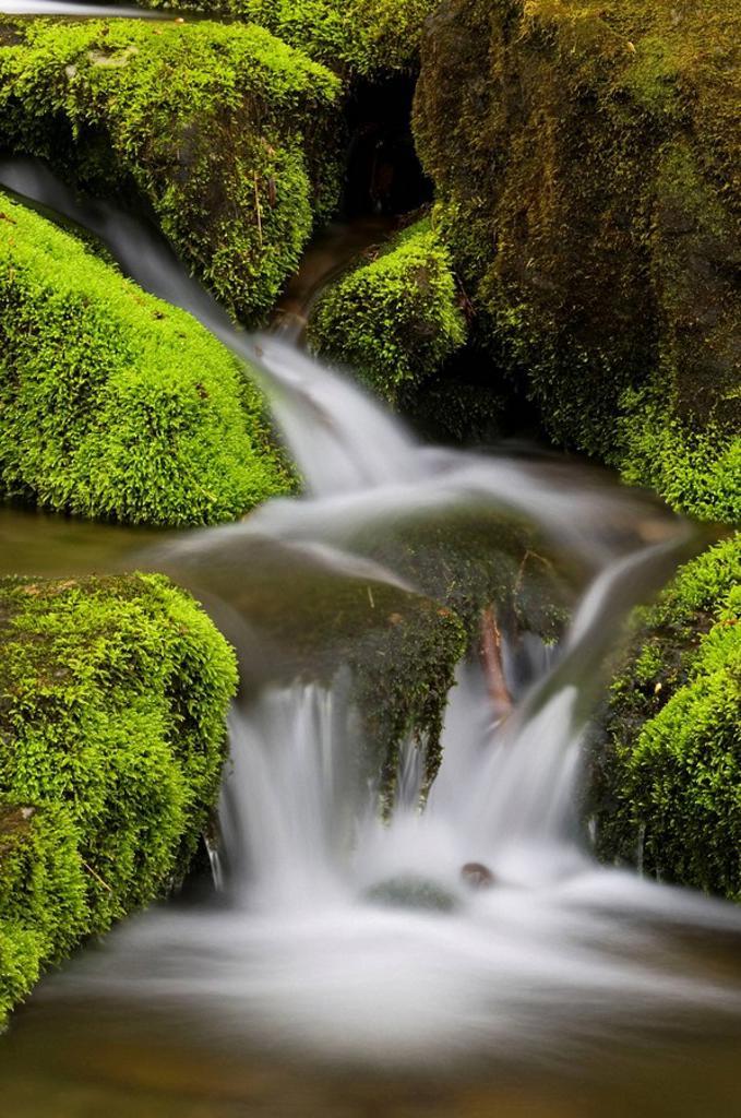 Stock Photo: 1566-396574 Mossy cascade