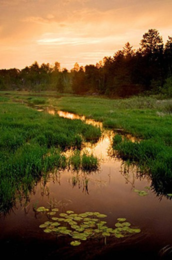 Stock Photo: 1566-396580 Beaver pond and water channel with dawn skies