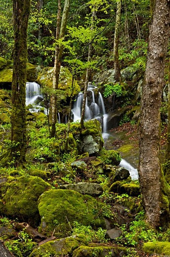 Stock Photo: 1566-396603 Spring cascade tributary of Middle Prong of the Little River. Appalachian, USA