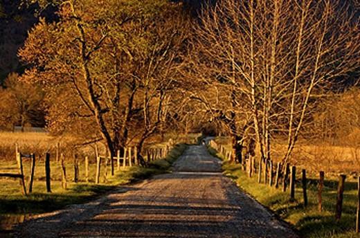 Stock Photo: 1566-396624 Sparks Lane at dawn. Appalachian, USA