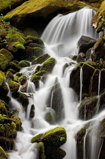Stock Photo: 1566-396629 Mossy cascade in tributary of Middle Prong of Little River. Appalachian, USA