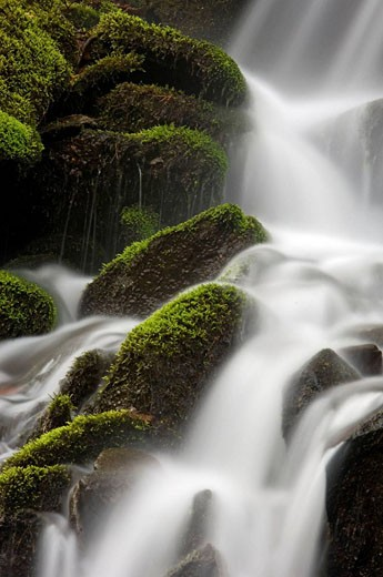 Stock Photo: 1566-396630 Mossy cascade in tributary of Middle Prong of Little River. Appalachian, USA