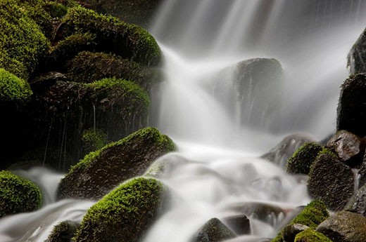 Mossy cascade in tributary of Middle Prong of Little River. Appalachian, USA : Stock Photo