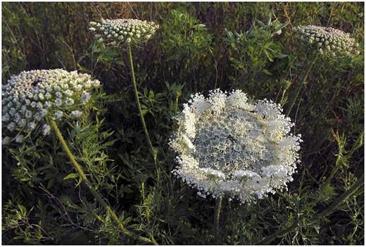 Stock Photo: 1566-397901 Flowers bloom in Golan Heights, Israel