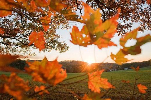 Stock Photo: 1566-400557 Autumn landscape