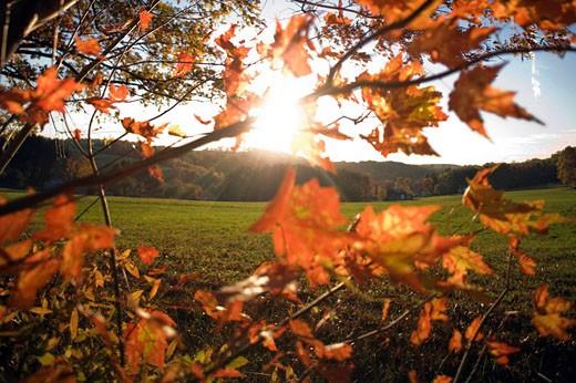 Autumn landscape : Stock Photo
