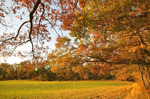 Stock Photo: 1566-400785 Autumn landscape