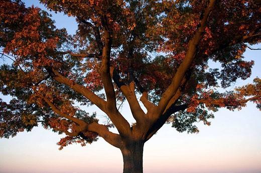 Stock Photo: 1566-400794 Single tree