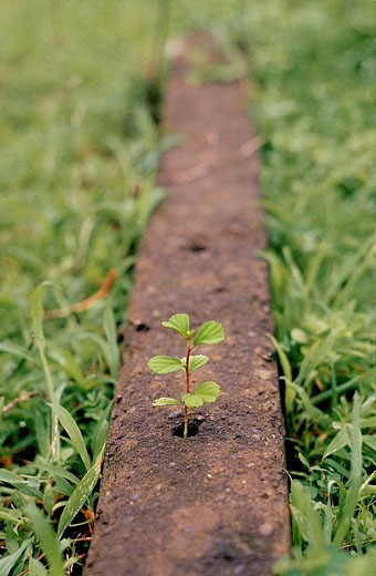 Stock Photo: 1566-401904 A Young Plant came out from a small hole in a cement concrete column. Chiplun, Ratnagiri, Maharashtra, India.