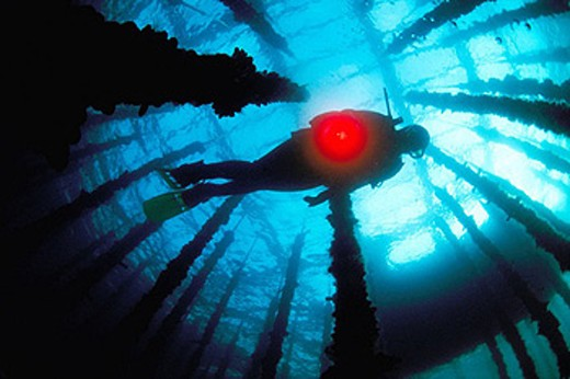 Diver at mussel farm. Galicia, Spain : Stock Photo