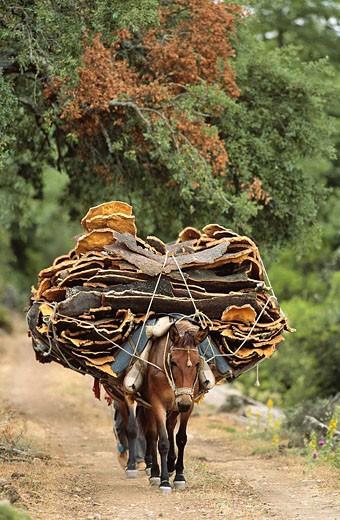 Cork transport, Cortes de la Frontera National Reserve. Malaga province, Andalucia, Spain : Stock Photo