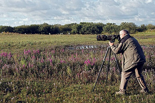 Photographer, Marquenterre regional park. Somme Bay, Picardie, France : Stock Photo