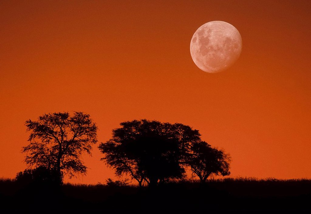 Stock Photo: 1566-413458 Dusk sky and moon, Kgalagadi Transfrontier Park, Kalahari, South Africa, image not digitally manipulated