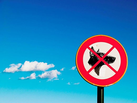 Stock Photo: 1566-415554 No dogs sign