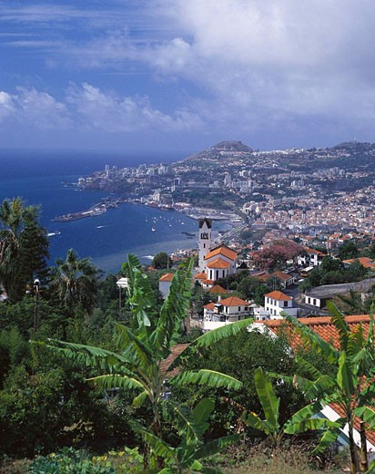 Stock Photo: 1566-420018 Funchal. Madeira Islands, Spain