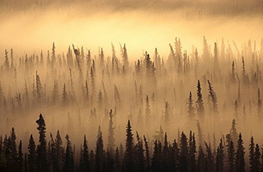 Stock Photo: 1566-420745 Fog over taiga, Wrangell-St. Elias National Park. Alaska, USA