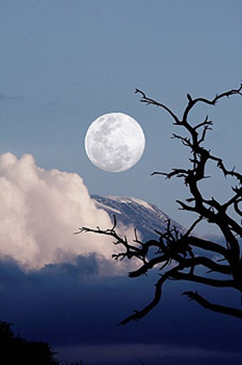 Stock Photo: 1566-425166 Sunset landscape with trees and Mount Kilimanjaro in background. Moon added as photo composite. Amboseli National Park, Kenya
