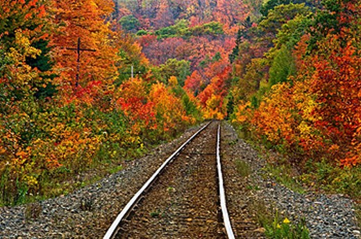 Algoma central rail line and fall colour, Canada : Stock Photo