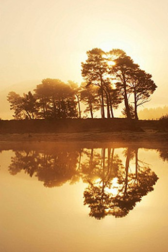 Scots pines - Pinus sylvestris - reflected in Loch nan Carraigean - at dawn  Cairngorms National Park  October 2006 : Stock Photo