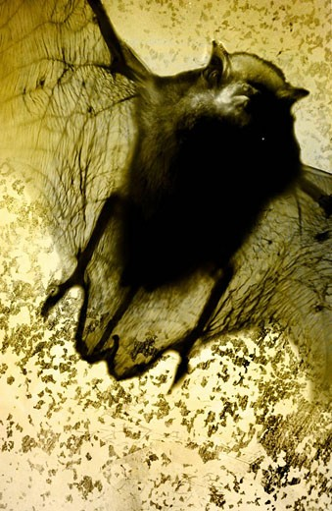 Stock Photo: 1566-430368 Bat