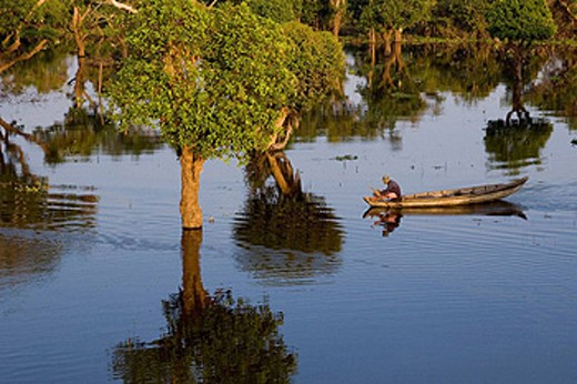 Stock Photo: 1566-431539 Boatman in the flooded forest, Kompong Phhluc on Tonle Sap lake, near Siem Reap, Cambodia