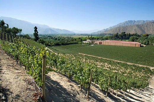 DON MAXIMIANO ESTATE VINA ERRAZURIZ WINERY ACONCAGUA VALLEY CHILE : Stock Photo
