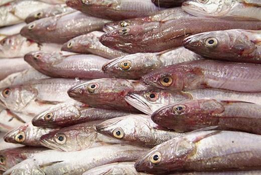 Merluccius merluccius. Sale at El Olivar market, Palma de Mallorca. Majorca, Balearic Islands, Spain : Stock Photo