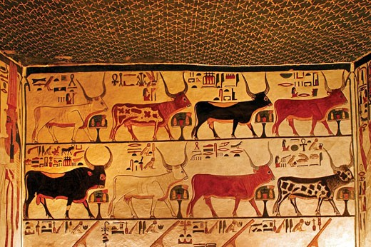 Stock Photo: 1566-437939 Queens Valley: detail of the Nefertari tomb, Luxor west bank. Egypt
