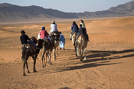 Stock Photo: 1566-439447 Tourists camel trekking in the Sahara desert, near Zagora, Morocco, north Africa