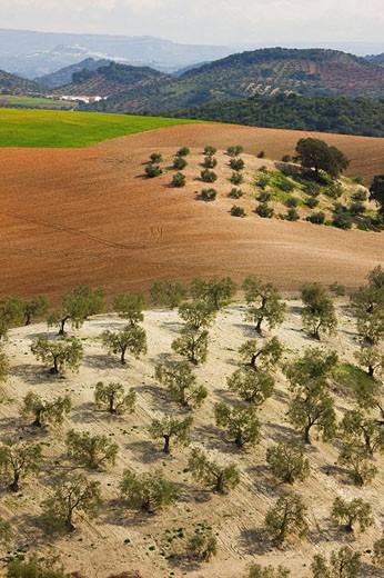 Stock Photo: 1566-439754 ´Campiña´ landscape. Córdoba province. Andalucia. Spain.
