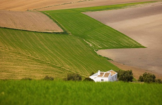 Stock Photo: 1566-439757 ´Campiña´ landscape. Córdoba province. Andalucia. Spain.
