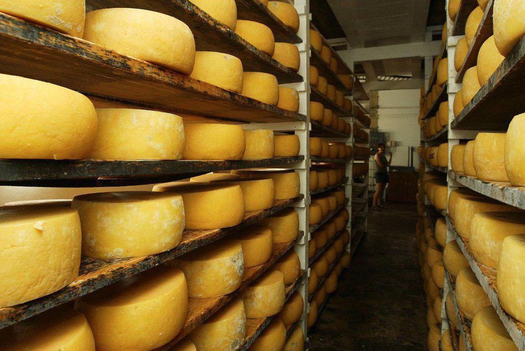 Stock Photo: 1566-441512 Curing cheeses, Beira, São Jorge island, Azores