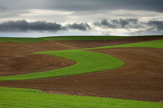 Stock Photo: 1566-451949 Fields, Washington, USA