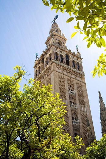 Stock Photo: 1566-452666 Giralda tower seen from Patio de los Naranjos, Sevilla. Andalucia, Spain.