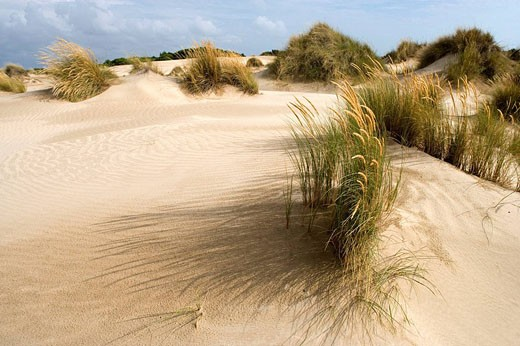Stock Photo: 1566-452883 Sand dunes, Doñana National Park. Huelva province, Andalucia, Spain