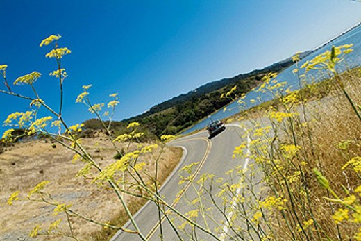 California, Route 1, through Pointe Reyes National Seashore : Stock Photo