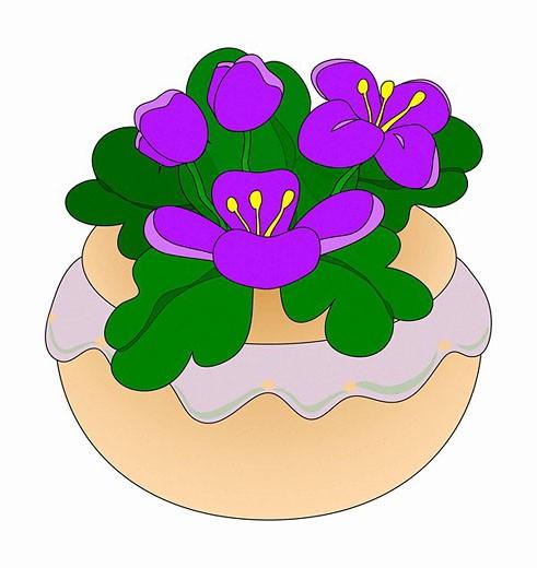 Stock Photo: 1566-459450 Violets