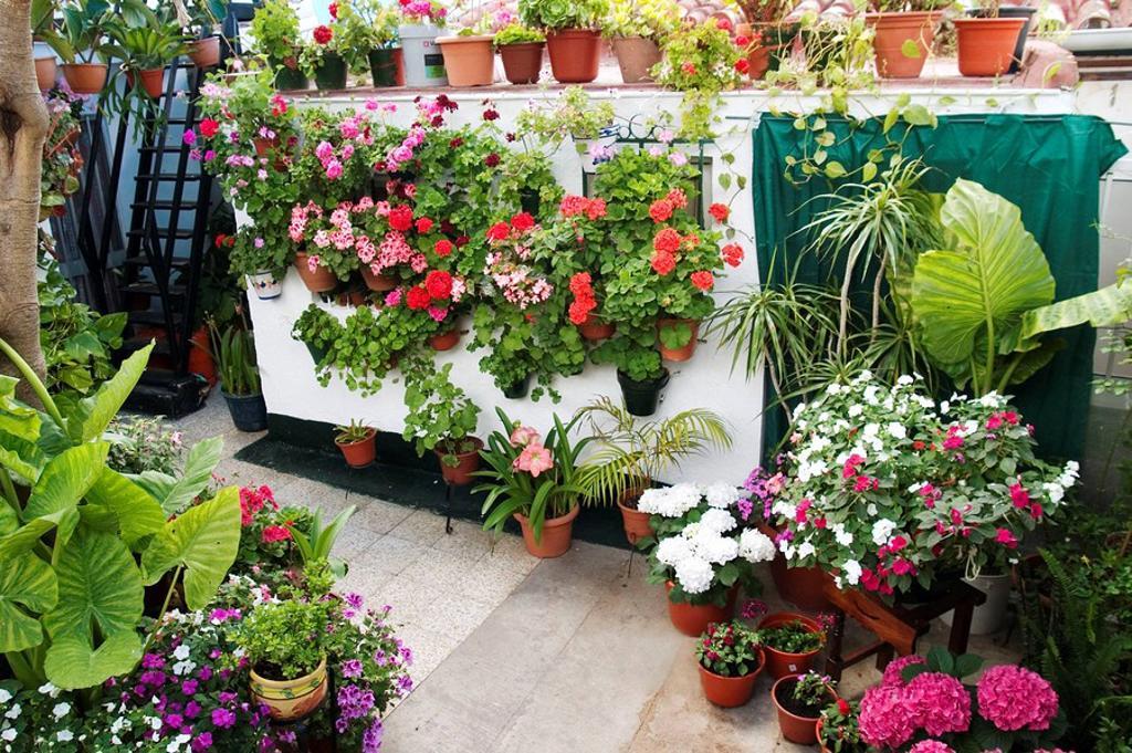 Stock Photo: 1566-464926 Andalucía, El Puerto de Santa Maria, España, Europa, Cádiz, patio típico andaluz engalanado para el concurso de patios, geranios (pelargonium), plantas, macetas con diversos tipos de flores