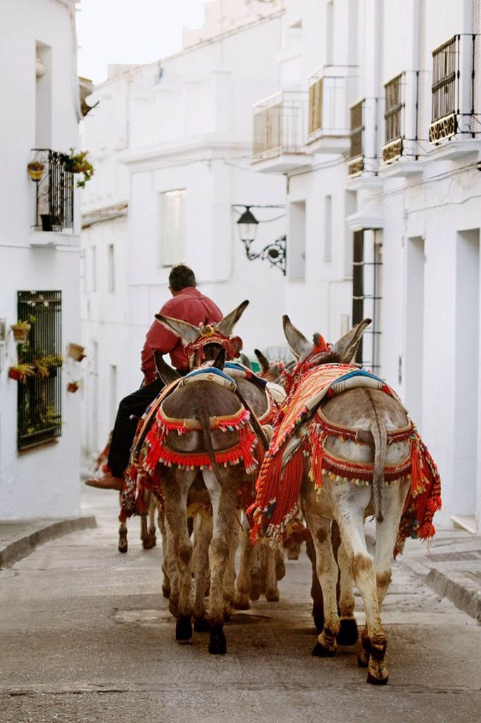 Stock Photo: 1566-465215 ´Burrotaxis´ donkeys, Mijas. Pueblos Blancos (´white towns´), Costa del Sol, Malaga province, Andalucia, Spain