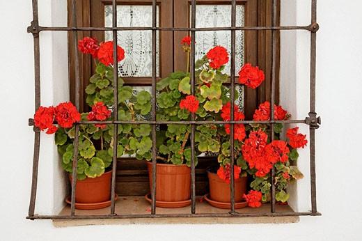 Flowerpots on window sill, Mijas. Costa del Sol, Pueblos Blancos (´white towns´), Malaga province, Andalucia, Spain : Stock Photo
