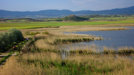 Stock Photo: 1566-465805 Laguna de Pitillas. Navarra. España. Europa.