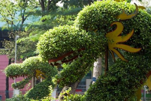 hedge in naga form, cong vien van hoa park, saigon, vietnam : Stock Photo