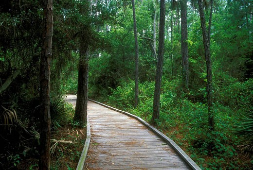 Boardwalk, Audubon Bird Sanctuary, Dauphin Island, Alabama. USA. : Stock Photo