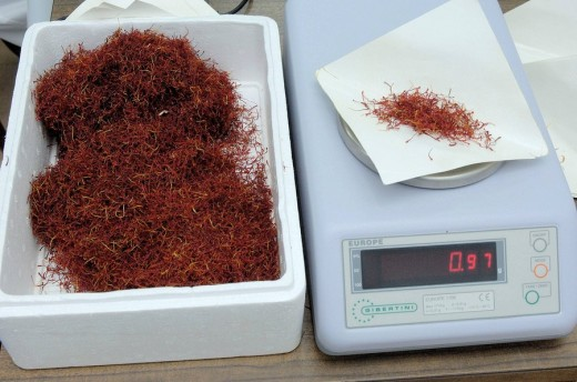 Manual Weigh Of Saffron With Precision Scale At Cefran Factory, Camuñas, Toledo Province, Castilla-la Mancha. Spain : Stock Photo